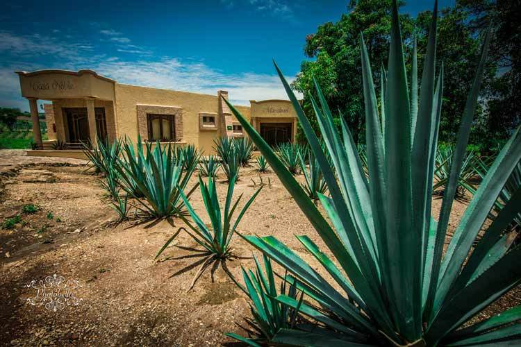 Agaves-Plant-Happyygarden.com