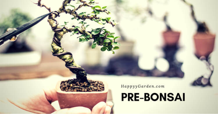 Pre-Bonsai-happyygarden.com