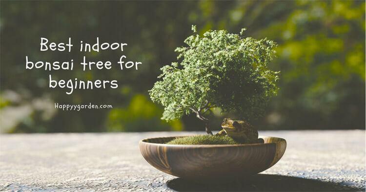 best-indoor-bonsai-tree-for-beginners-happyygarden.com