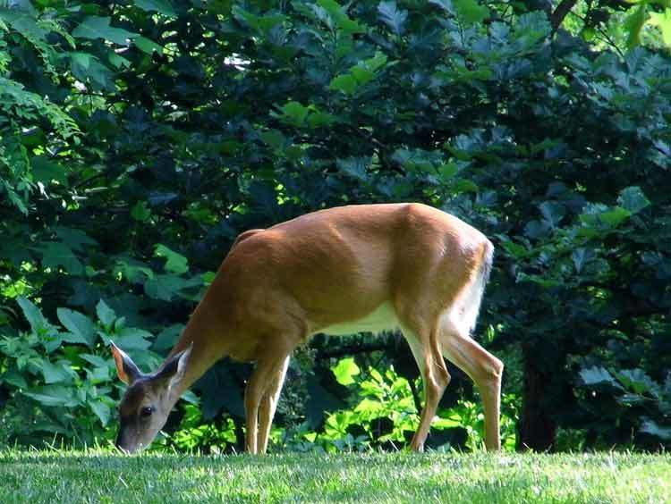 What Animals Eat Hostas Creatures That You Need To Be Aware Of