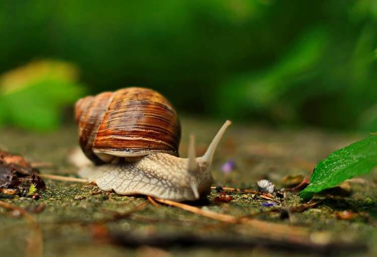Snail-happyygarden.com