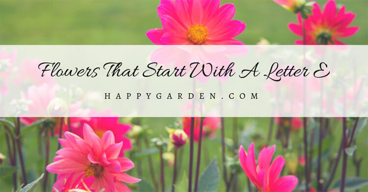 Flowers-That-Start-With-A-Letter-E