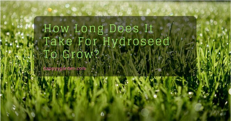 How-Long-Does-It-Take-For-Hydroseed-To-Grow