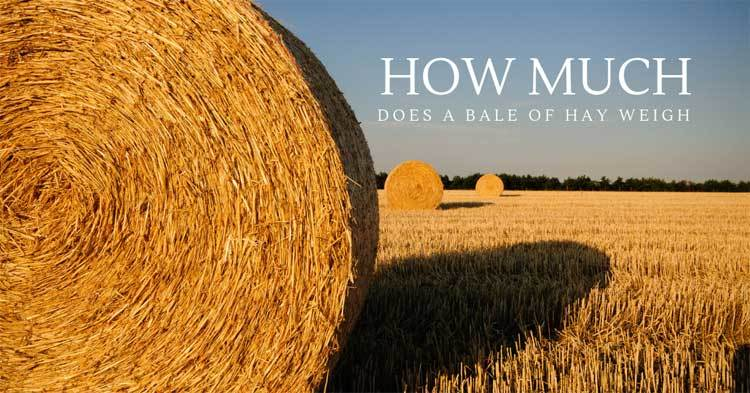 How-Much-Does-A-Bale-Of-Hay-Weigh