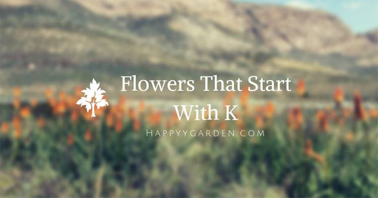 flowers-that-start-with-k