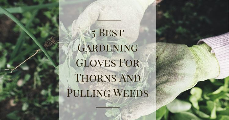 5-Best-Gardening-Gloves-For-Thorns-And-Pulling-Weeds-Reviews