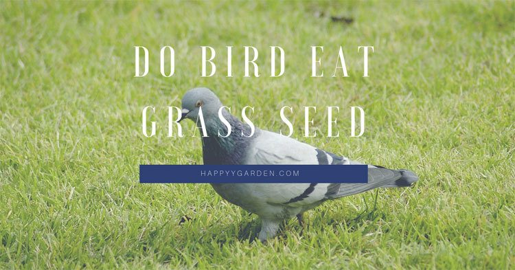 do-birds-eat-grass-seed