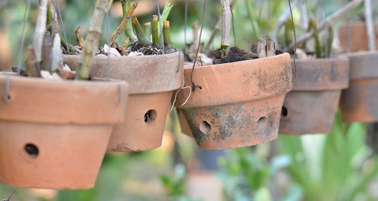 Different-Kinds-of-Orchid-Pots