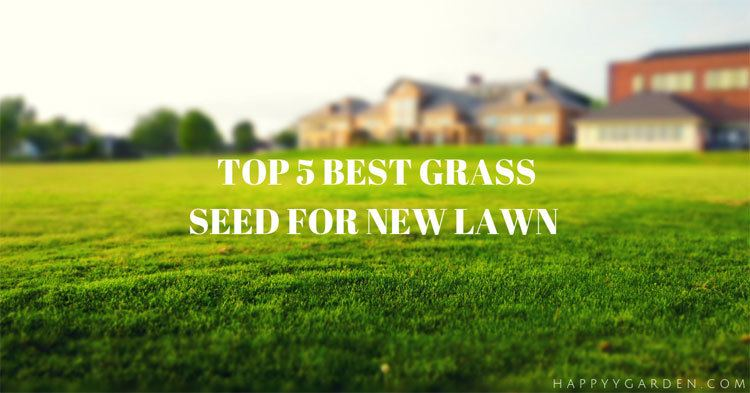 best-grass-seed-for-new-lawn