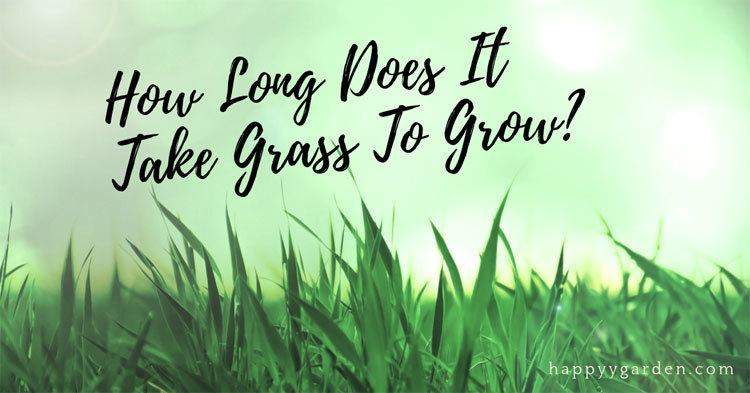 how-long-does-It-take-grass-to-grow