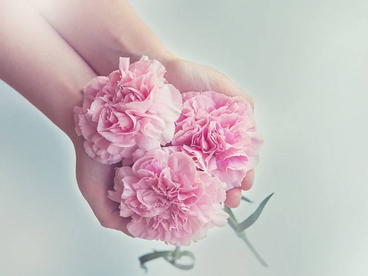 Carnation-The-flower-of-a-mother's-undying-love-and-affection.