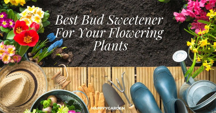 best-bud-sweetener-for-your-flowering-plant