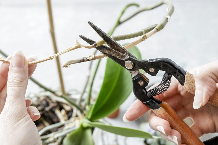 how-to-divide-an-orchid