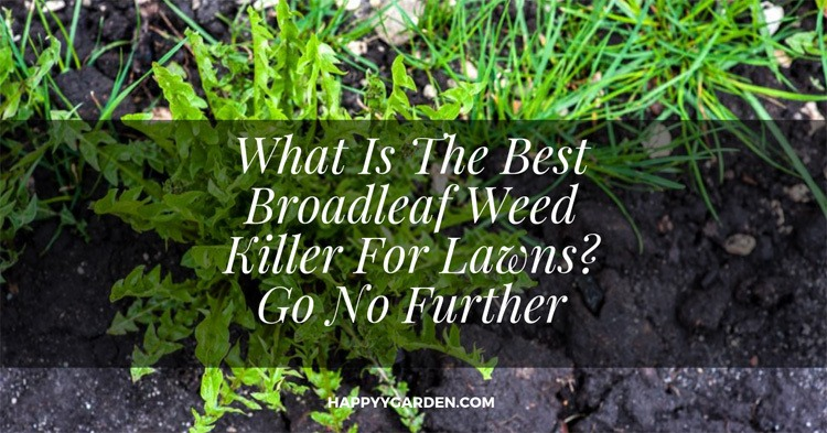 what-is-the-best-broadleaf-weed-killer-for-lawns