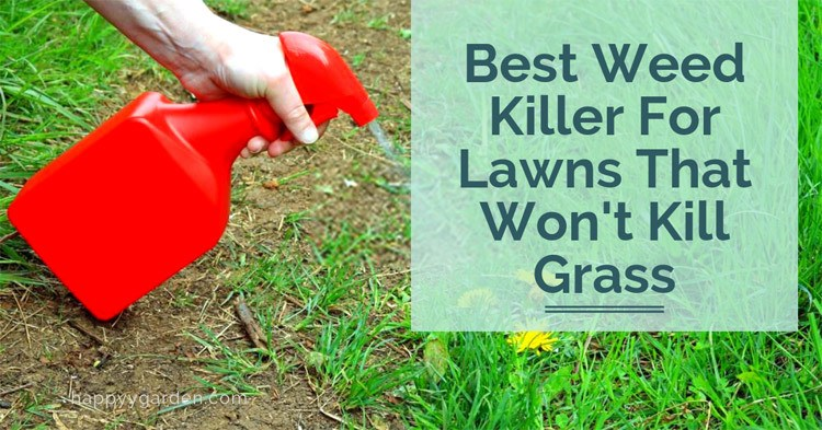 what-is-the-best-weed-killer-that-does-not-kill-grass