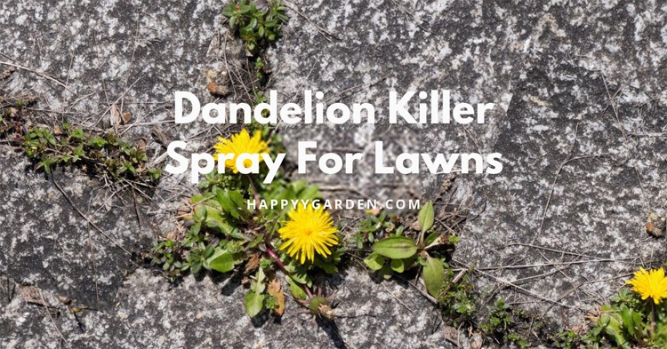 Dandelion-Killer-Spray-For-Lawns