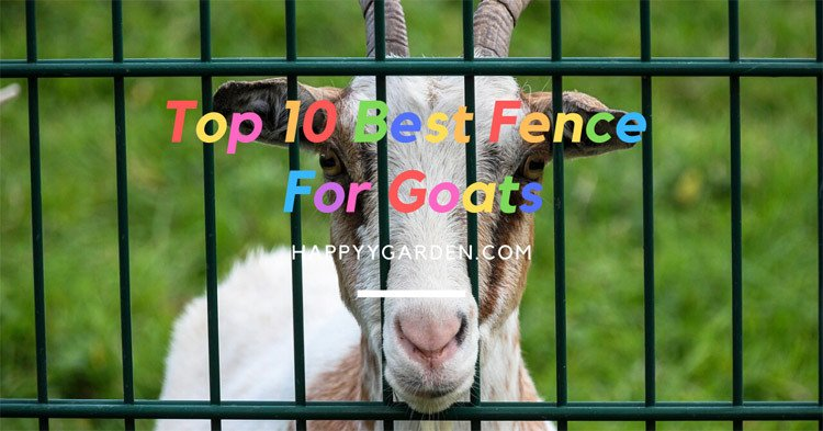 Best-Fence-For-Goats