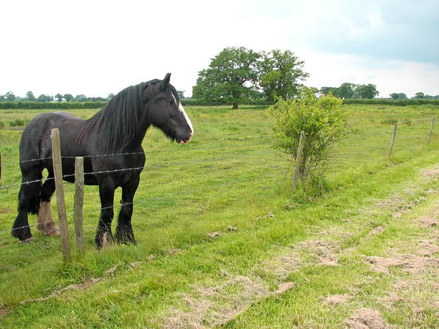 Horse-pasture-on-private-farmland
