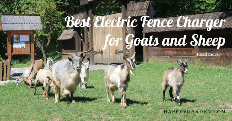 Best-Electric-Fence-Charger-for-Goats-and-Sheep