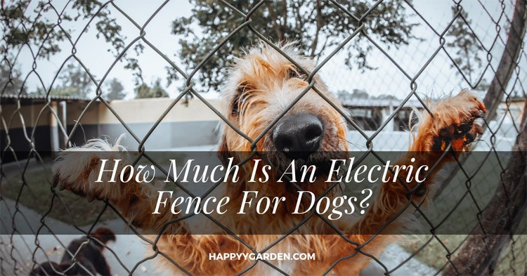 how-much-is-an-electric-fence-for-dogs