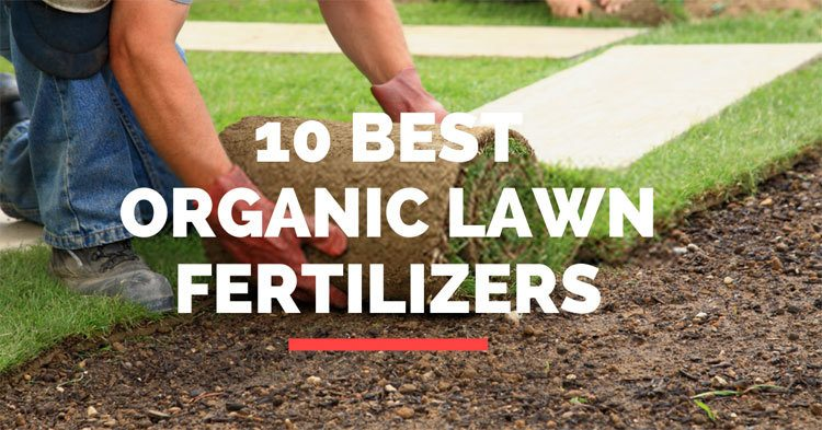 10-Best-Organic-Lawn-Fertilizers
