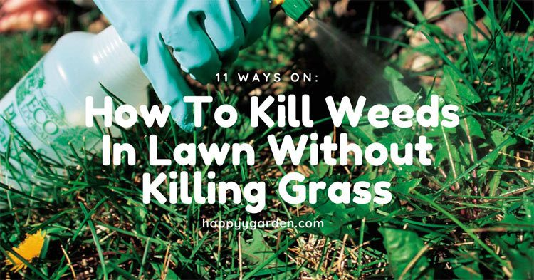 How-To-Kill-Weeds-In-Lawn-Without-Killing-Grass