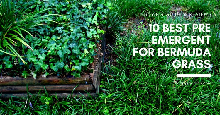 10-Best-Pre-Emergent-For-Bermuda-Grass