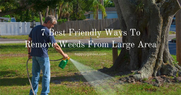 Friendly-Ways-To-Remove-Weeds-From-Large-Area
