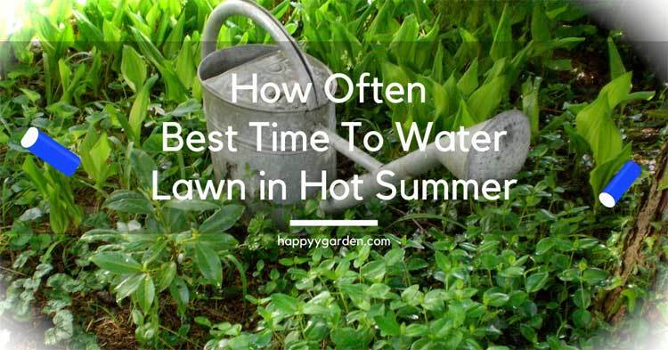 How-Often-And-Best-Time-To-Water-Lawn-in-Hot-Summer