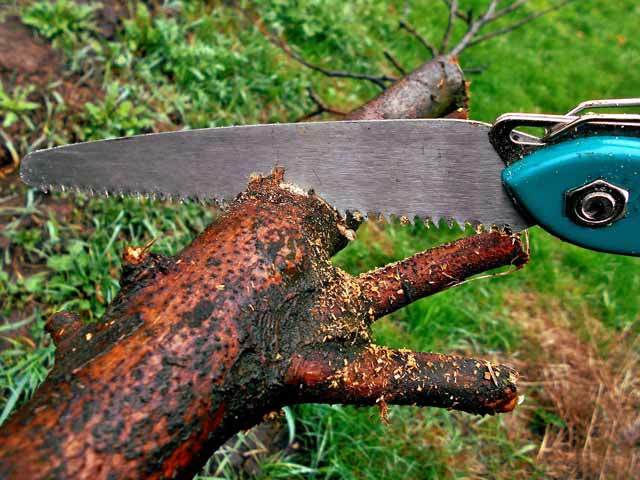 hand-saw-for-tree-cutting