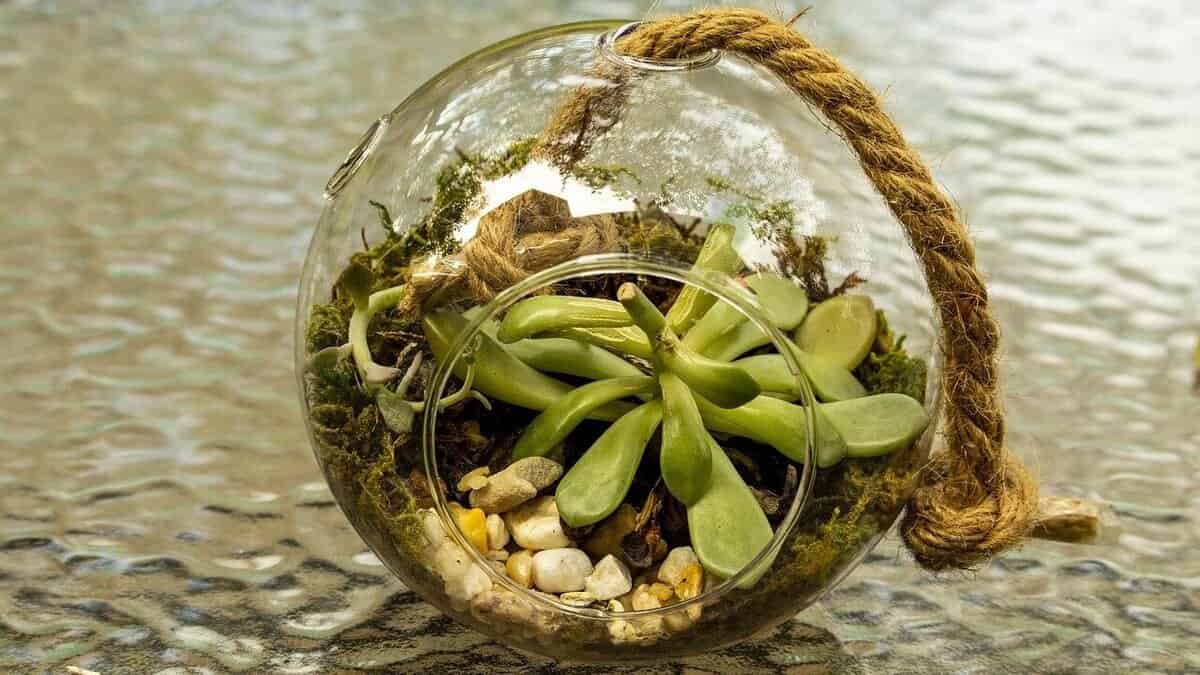 Featured Image - Glass terrariums